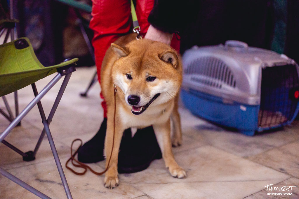 проспект медиа, выставка собак