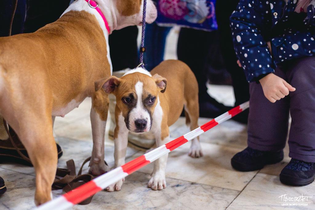 проспект медиа, выставка собак в коврове, зима в коврове 2020, ДК Современник