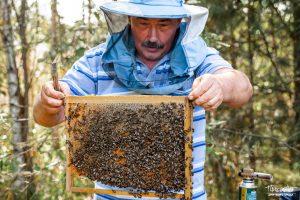 проспект медиа, пасека, мед в коврове, сделано в коврове, андрей андреев