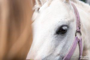 проспект медиа, лошадь,
